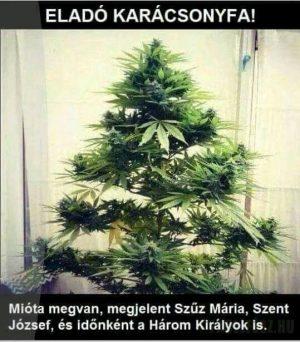 Őrült kender karácsonyfa