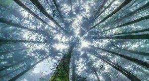 fák természet