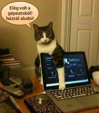 Cica számítógép