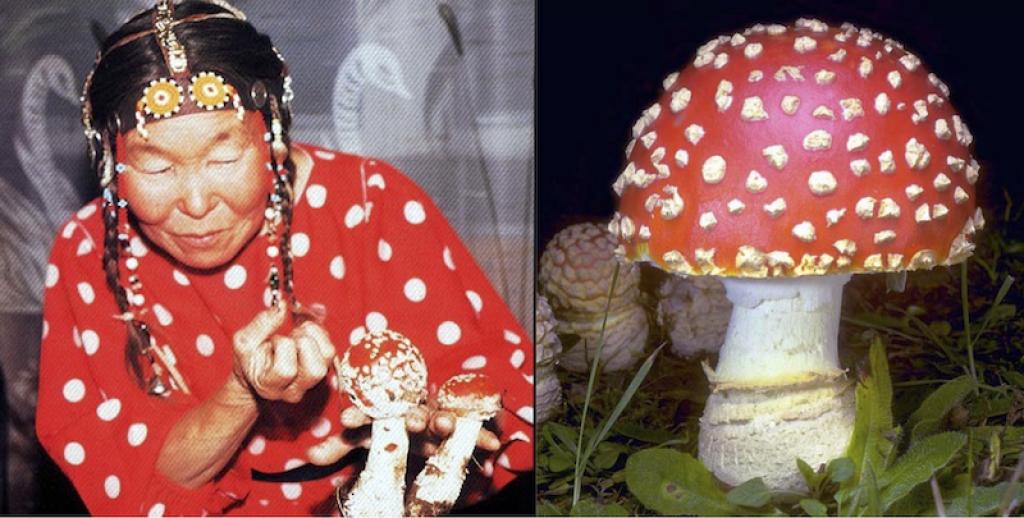 Szibériai sámán varázsgombának légyölő galócának hallucinogén gombának öltözve