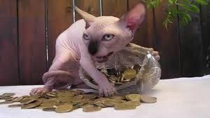 Cica pénz