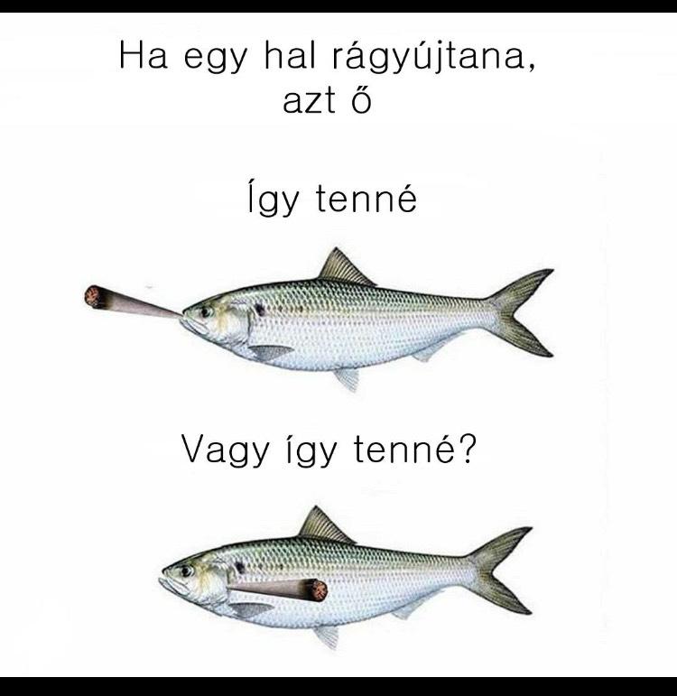 Társkereső oldal kék hal