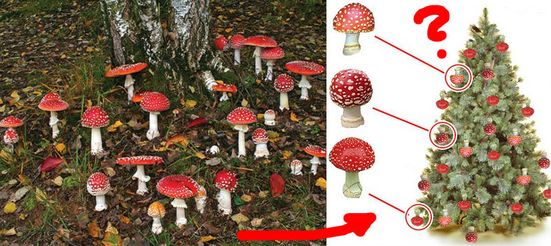 Amanita muscaria mushrooms fly agaric christmass Santa