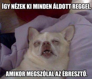 Hétfő reggeli fáradtság vicces kép